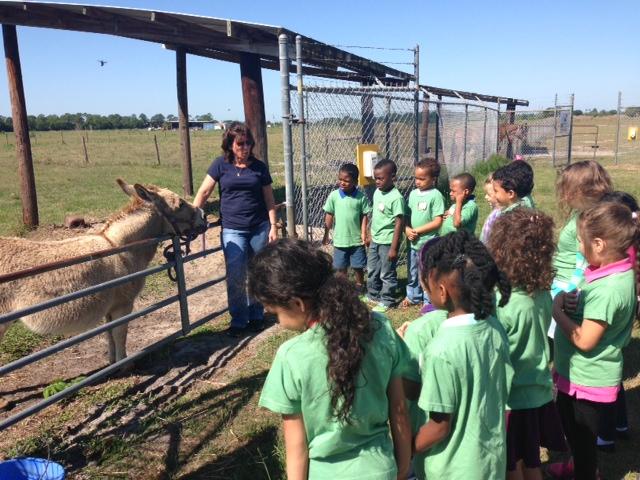 Mariposa Kindergarteners visit the 4-H Farm